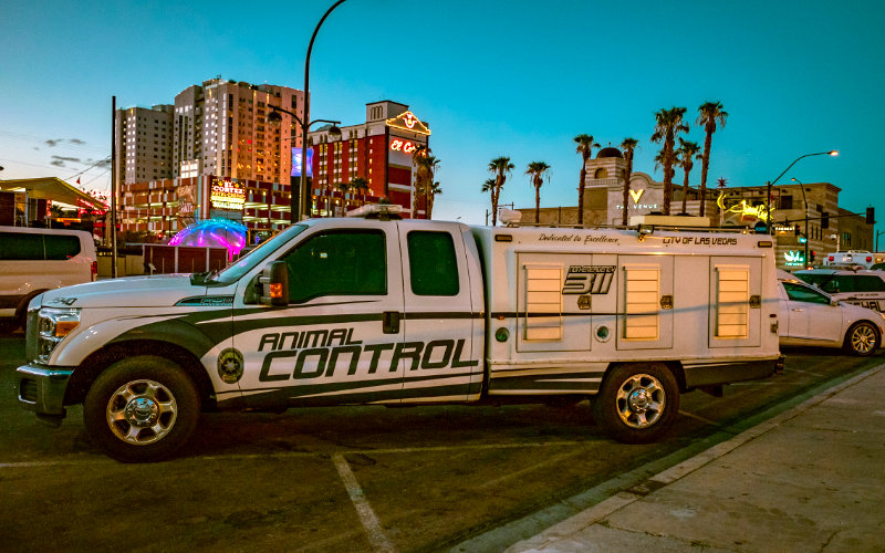 AnimalControlTruck