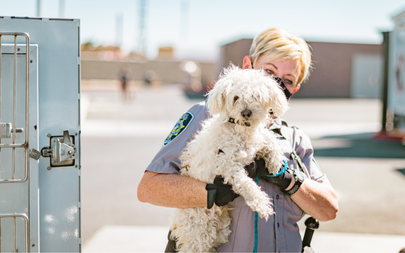 image for Animal Cruelty Ordinance