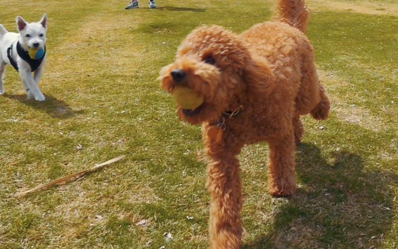 image for Enjoy Our Dog Parks
