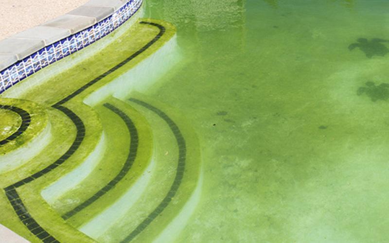 greenpool-slider.jpg